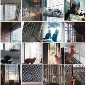 門窗防護竟然這麼簡單 - 防貓墜樓懶人包