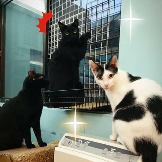 貓咪門窗戶防護竟然這麼簡單 - 防貓墜樓懶人包
