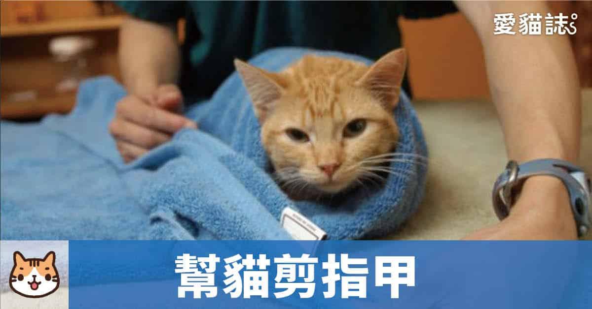 幫貓剪指甲