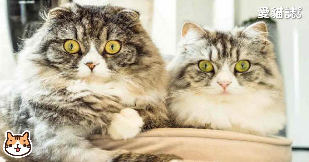 新舊貓不合怎麼辦 - 新舊貓隔離相處懶人包