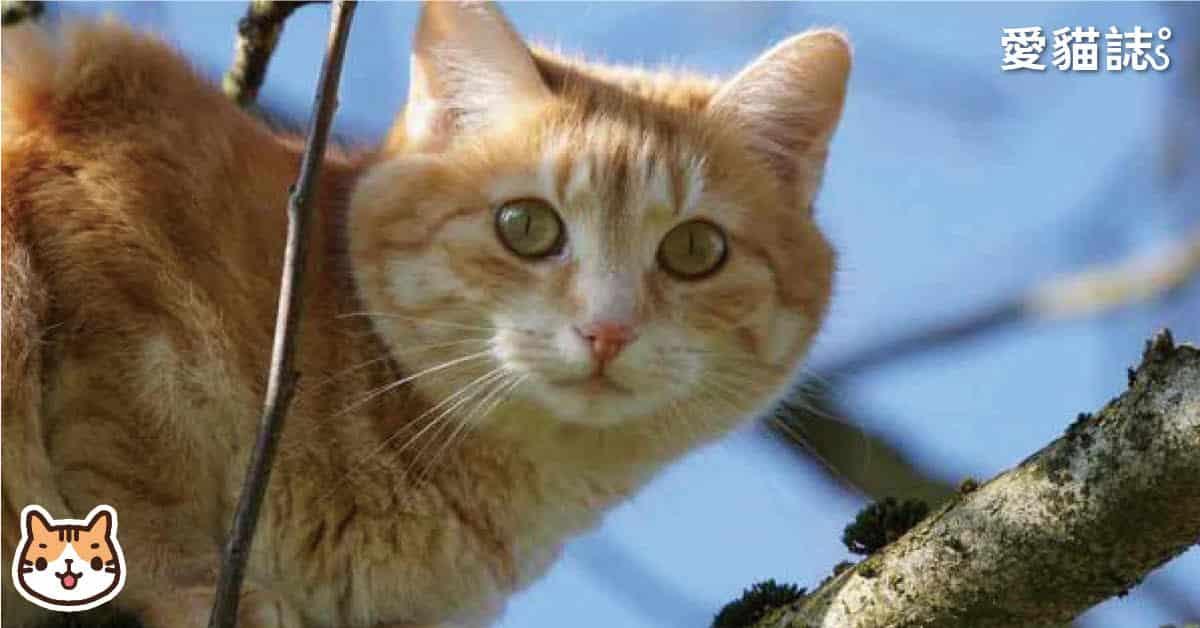 貓走失怎麼找回-走失62天找回經驗分享