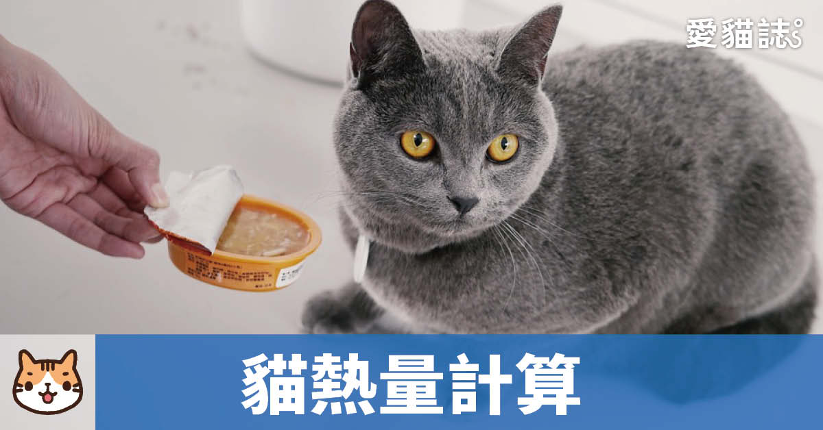 貓咪熱量每日需求計算