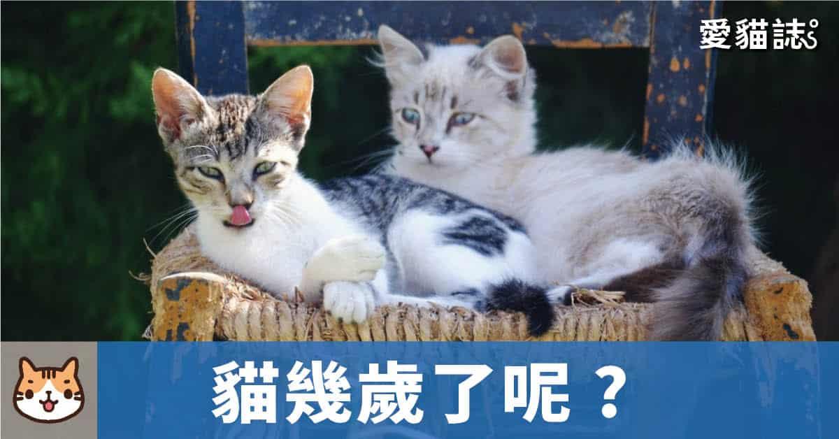 貓咪換算人類的壽命是幾歲了