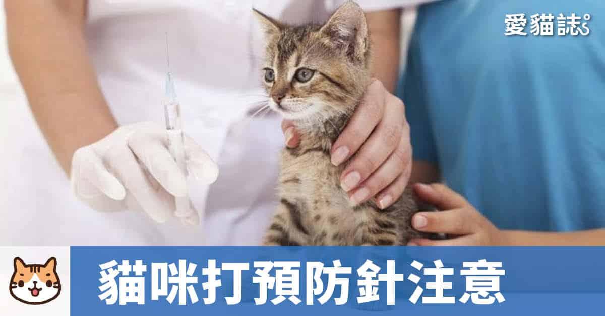 貓一定要打預防針嗎?貓咪疫苗多久打一次-養貓新手必讀