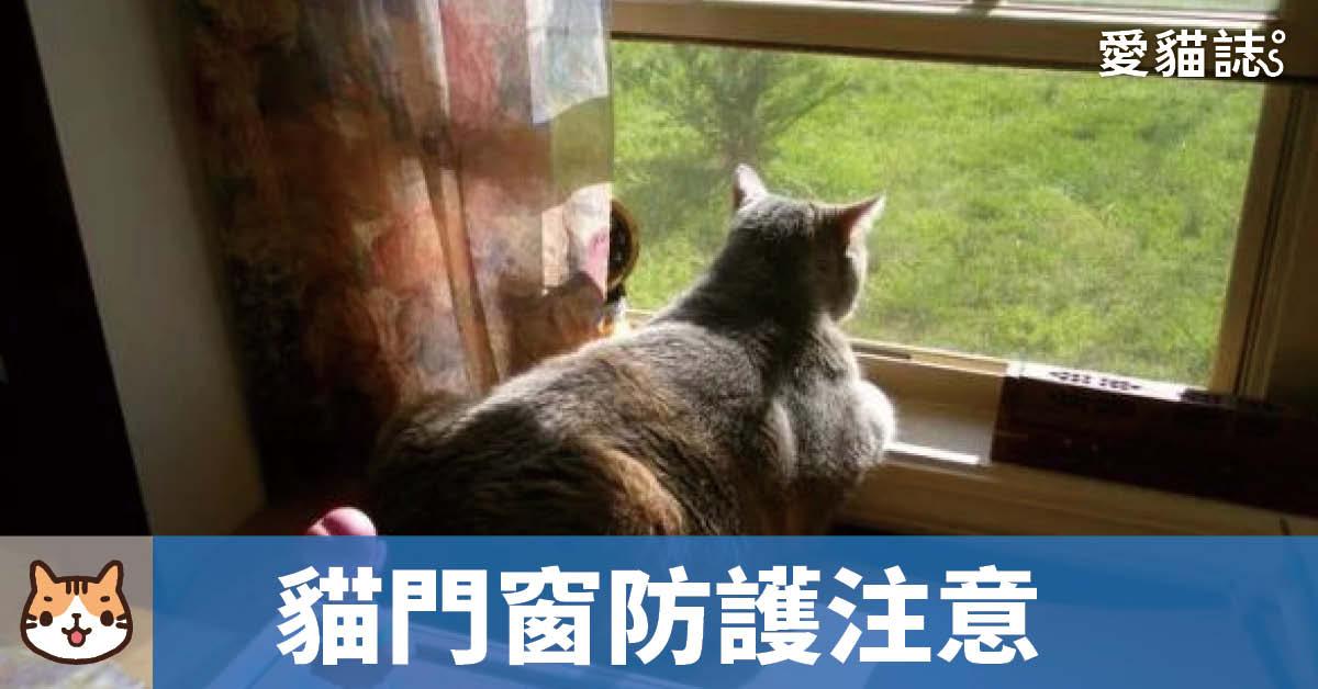 貓咪門窗戶防護