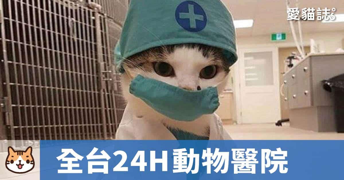 24小時動物醫院