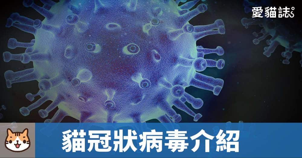 貓冠狀病毒介紹
