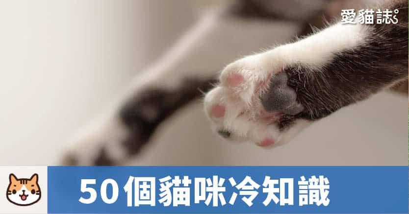 貓咪50個有趣冷知識