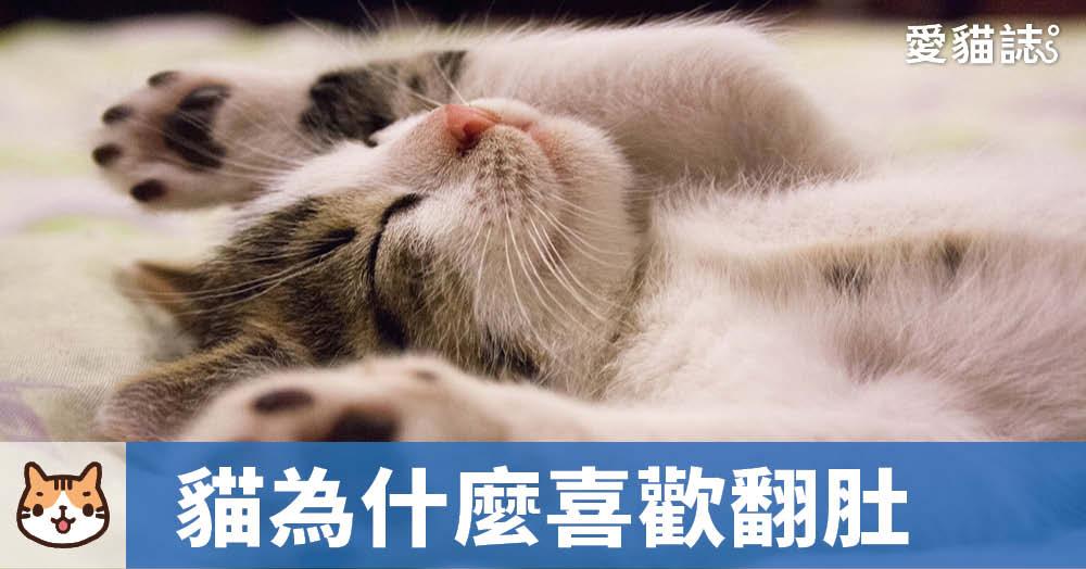 貓為什麼喜歡翻肚子