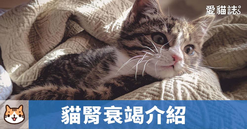 貓腎衰竭介紹