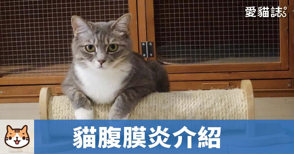貓腹膜炎介紹