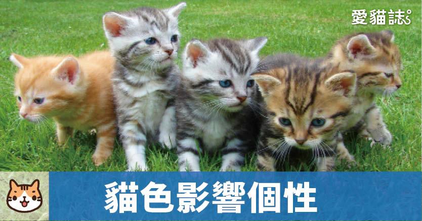 貓花色會影響個性嗎