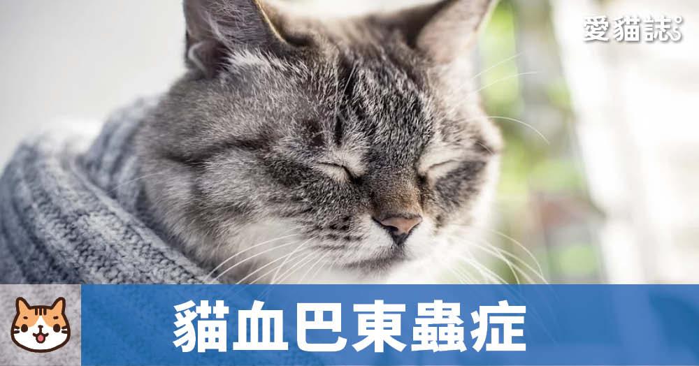 貓血巴東蟲症